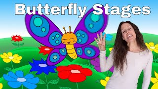 Butterfly Lifecycle Youtube