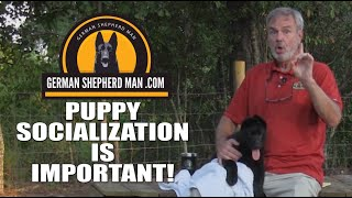 THE most important part of German Shepherd Puppy training!!!