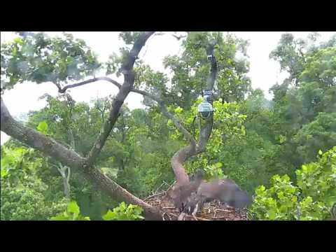 AEF DC The one where Liberty travels all over the nest tree 06JUN2016