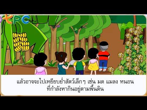 ธรรมชาติเจ้าเอย - สื่อการเรียนการสอน ภาษาไทย ป.3