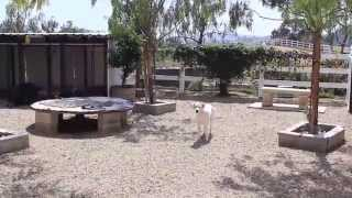 Dog Boarding Los Angeles And Dog Training