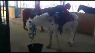 Pas mal la façon de monter a cheval