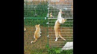 Koty & Mozart :) Cats & Mozart ;)