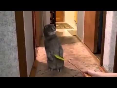 Смехота!  Кот