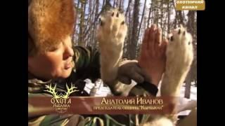 Охота на волка в Якутии видео напряженная ситуация