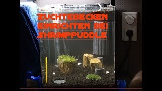 GARNELEN ZUCHT AQUARIUM SETUP / SHRIMPPUDDLE 2017