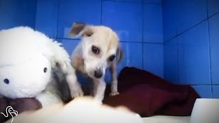 Starving Puppy Grows Up To Be The Most Playful Dog
