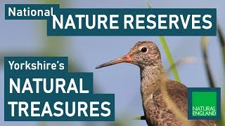 National Nature Reserves: Yorkshire's Natural Treasures