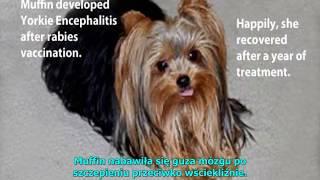 Ciemna strona szczepień zwierząt domowych - napisy PL