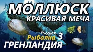 Моллюск Красивая меча / РР3 [ Русская рыбалка 3.9 Гренландия]