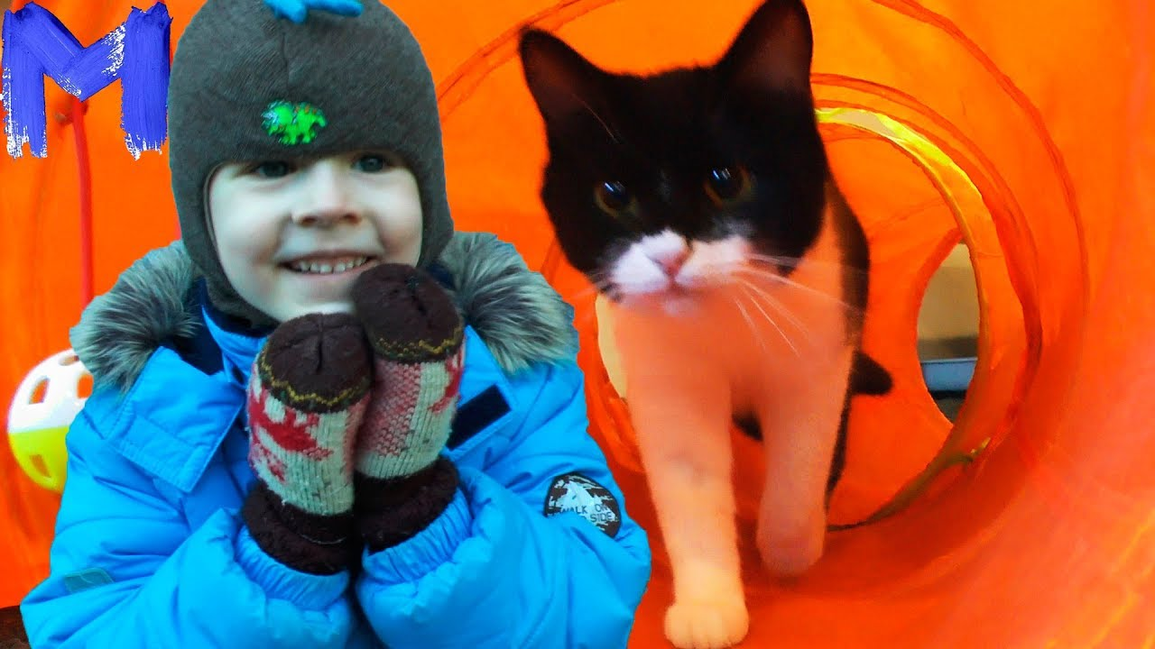 Макс в Котокафе The Cats Perm - Видео про котов, кошек и котят. Развлечения для детей и взрослых