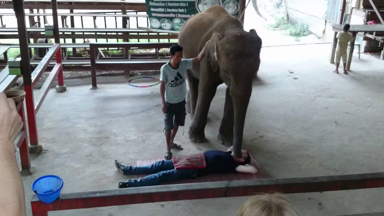 dramblių trynių svorio netekimas)