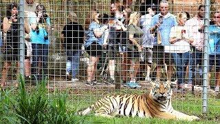 700 Guests Visit Big Cat Rescue!!