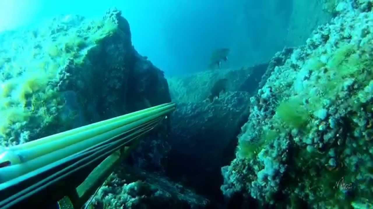 Fusil chasse sous marine  Info Pêche > Petites annonces