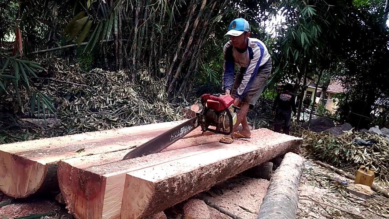 Belak Kayu Durian Youtube