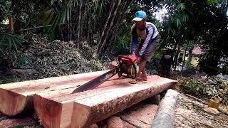 Belak kayu.. durian
