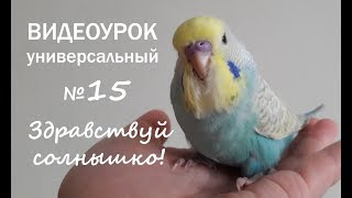 """🎧 Учим попугая говорить. Урок №15: """"Здравствуй, Солнышко!"""""""