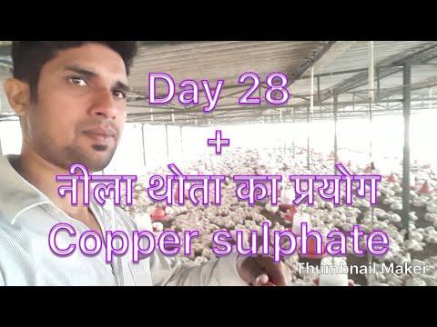 Poultry farming हिन्दी में Day 28