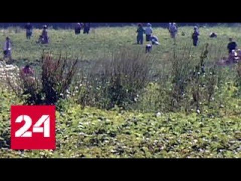Смотреть Пайщики совхоза имени Ленина: Грудинин забрал нашу землю - Россия 24 онлайн