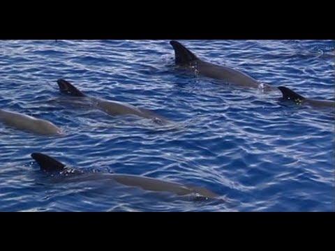 Mga kakaibang ugali ng marine wildlife sa Bohol Sea
