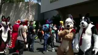 Califur 2015 Video