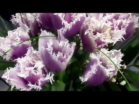 33. Тюльпаны-хищники - миф🌷/Tulips-predators - myth🌷