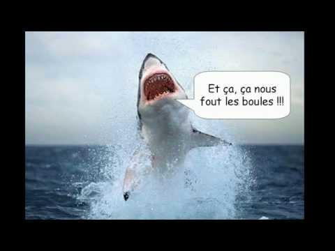 Stop, Science : les Requins, des fossiles vivants ?