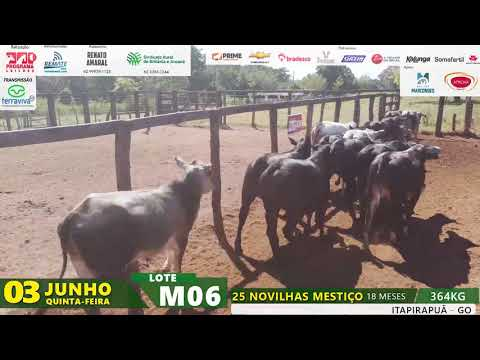 LOTE M06