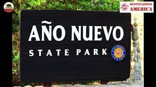 Año Nuevo State Park - California