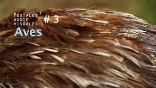 Latinoamérica verde - Capítulo 3: Aves // www.orugo.cl Thumbnail