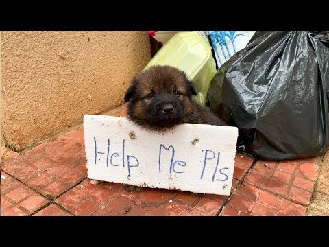 Lonely Puppy Waits On Street For Someone | Who Can Take Him Home
