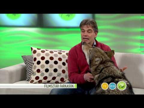 Hollywoodi filmsztárokkal forgatott a magyar farkas - 2016.02.09. - tv2.hu/fem3cafe thumbnail