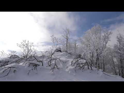 Wind Sounds 2 Hours / Cold Winter Wind Blowing Through Frozen Forest
