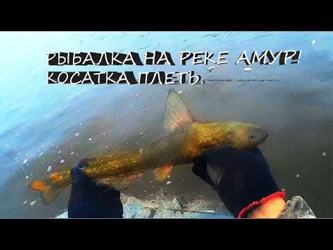 Рыбалка сплавными сетями, косатка плеть, сом лещ, и другие рыбы Амура