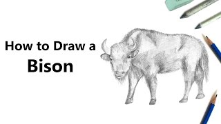 How to Draw a Bison with Pencils [Time Lapse]
