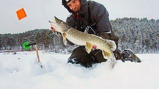 ВОТ ЭТО УЛЁТНАЯ РЫБАЛКА 97 Первый лед 2020 Зимняя рыбалка 2020 Приколы на зимней рыбалке