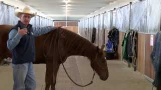 Lateral flexion problems in the snaffle