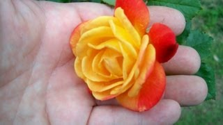 Rose plant Tips - Rose Care - Bigger better Roses