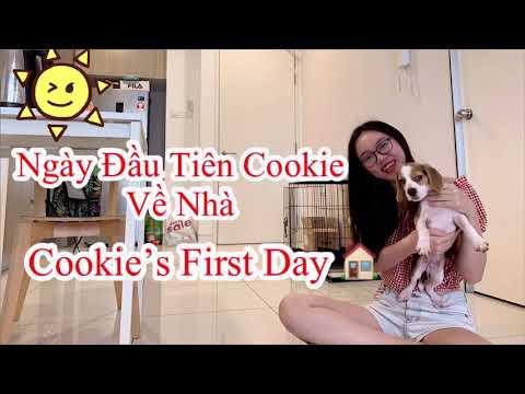 Ngày Đầu Tiên Cookie Về Nhà l Beagle Puppy Cookie's First Day At Home 🐶