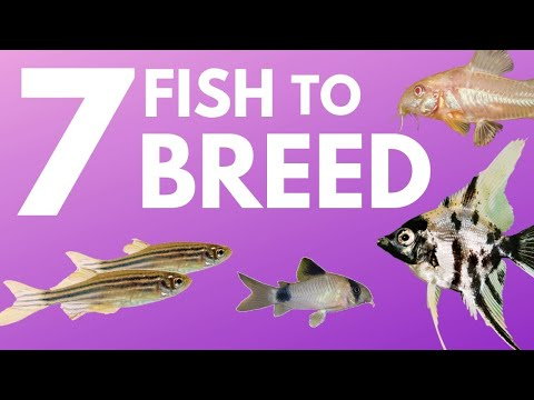 7 Easy To Breed Fish That You Might Not Have Tried Yet