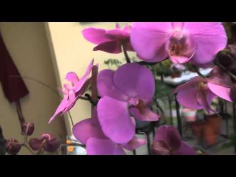 Florist Odessa Kingston Plant Factory ON