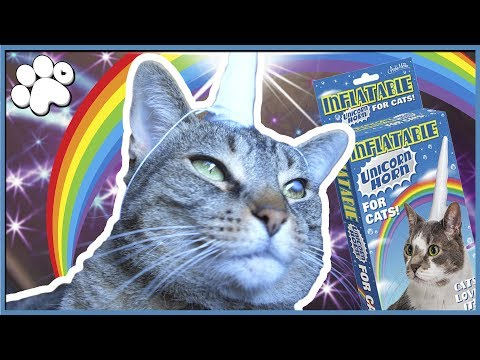 THE MAJESTIC JACKICORN! - Inflatable Cat Unicorn Horn Test