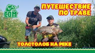 Путешествие по траве Толстолоб на Дону