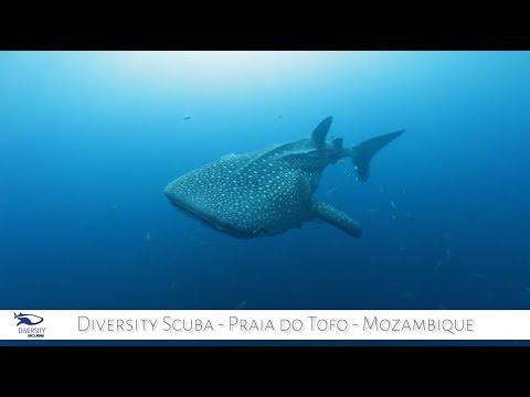 Visit Mozambique | Diversity Scuba Praia do Tofo Mozambique