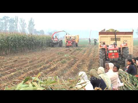 Process of making silage from silage harvester