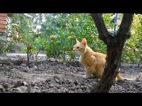 Relaxing Cat Video 5