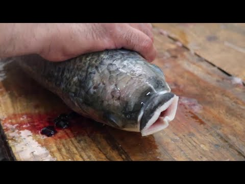 WEIRD Fish Cleaning Style - Giant Mullet Fish How To Fillet A Grey Mullet