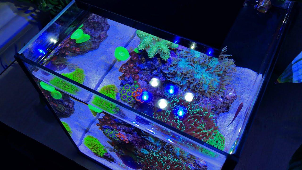 ALL MY CORALS: 10 Gallon Nano Reef Tank