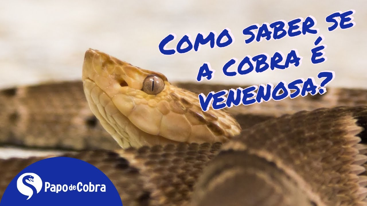 Papo de Cobra