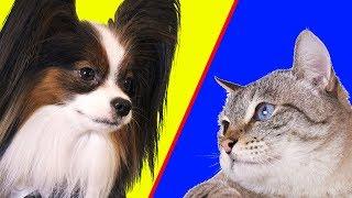 Коты ПРОТИВ собак! Рум Тур ПОЕДИНОК 1 часть / Сериалити от ЮКИ 2 серия